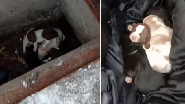 Пятерых из восьми замерзающих новорожденных щенков удалось спасти в Кокшетау