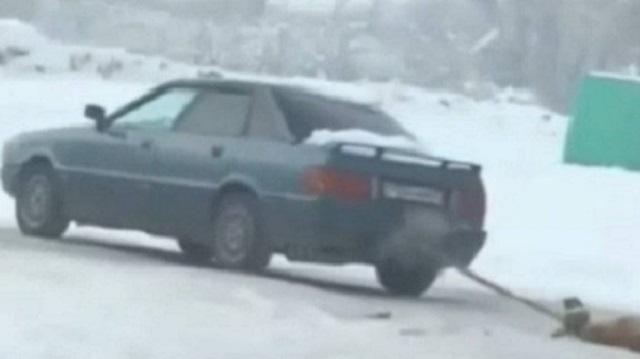 Привязанную к автомобилю за голову собаку протащили по дороге