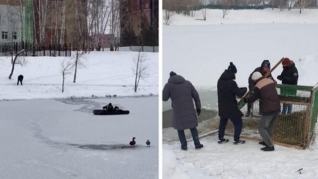 На надувном матрасе депутат из Новосибирска пытался спасти застрявшую на озере утку