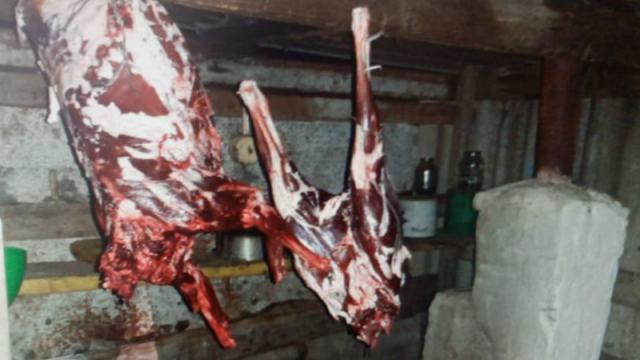 «Я не нарочно, просто совпало»: Мужчина убил и разделал косулю в Костанайской области