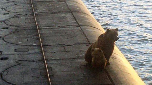 Российские военные убили медведицу с медвежонком на подводной лодке