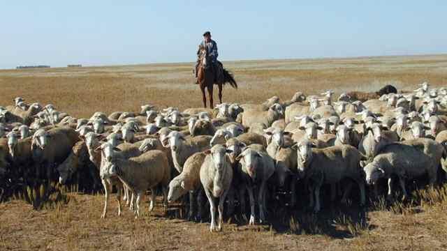 Популярного чабана-тиктокера Абдикадыра Наурызбека задержала полиция
