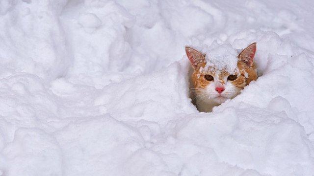 Каким будет февраль в Казахстане. Прогноз синоптиков