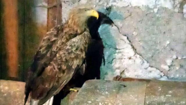 Дом для раненого орла из Красной книги ищут лесники в Костанайской области