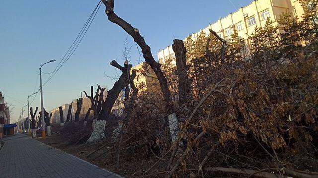 На свалки и вырубку деревьев теперь можно жаловаться экологам напрямую в Казахстане