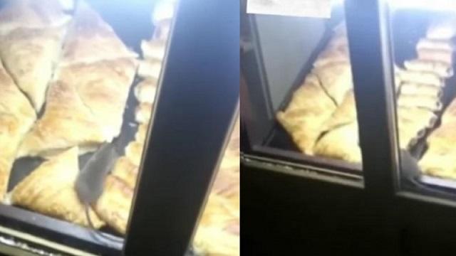 В Казахстане бегающую по самсе крысу сняли на видео