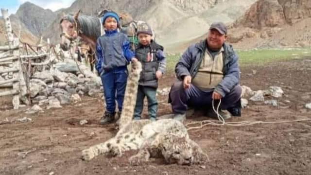 «Очередной герой»: Фото убитого снежного барса обсуждают в Казахстане
