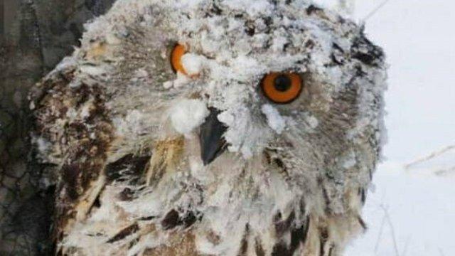 Замёрзший филин решил согреться в магазине Усть-Каменогорска