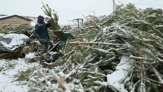 Куда отвозят отслужившие новогодние ёлочки из Костаная?