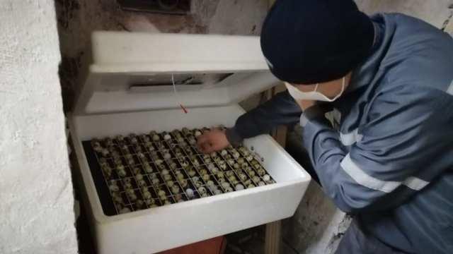 «100–120 яиц в день»: Как в колонии максимальной безопасности заключенные перепёлок выращивают