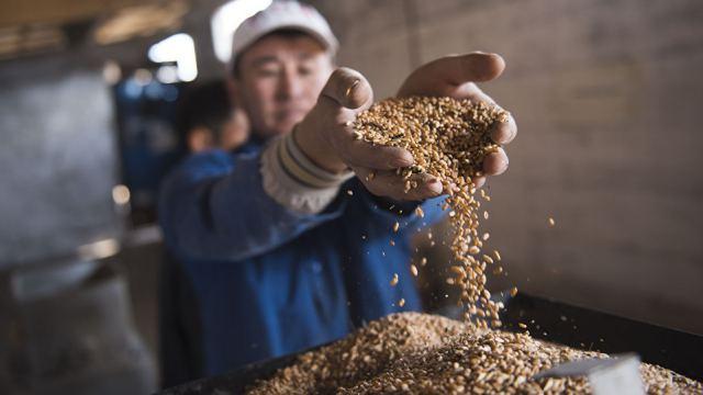 «Мука адова»: Казахстан теряет мукомольную промышленность