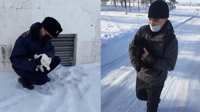 Осужденные-волонтеры из Павлодарской области спасают замерзающих животных