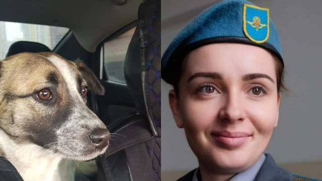 «Назовём тебя Гильзой!» Как бездомная собака попала в семью подполковника из Казахстана