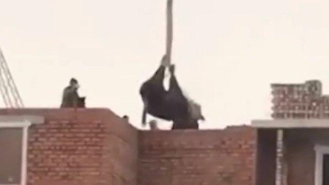 Британские СМИ написали о «летающей» корове на стройке в Нур-Султане