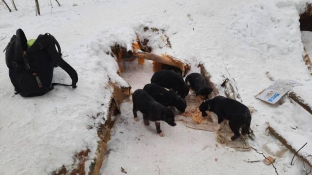Детский сад для бездомных щенков устроил пенсионер из Челябинска