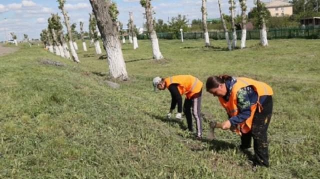 Озеленение в Костанае: Проблема экологии по-прежнему не решена