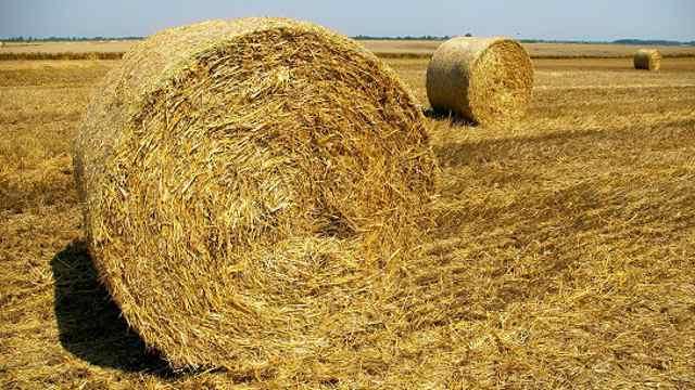 Засуха спровоцировала рост цен на сено в Костанайской области