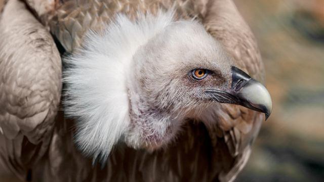 Посетитель убил краснокнижную птицу в Московском зоопарке