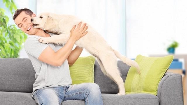 «Сам признался»: Житель Самары изменял жене с их собакой