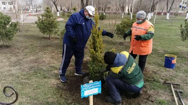 «Именное деревце»: Аллея из голубых елей появилась в Рудном