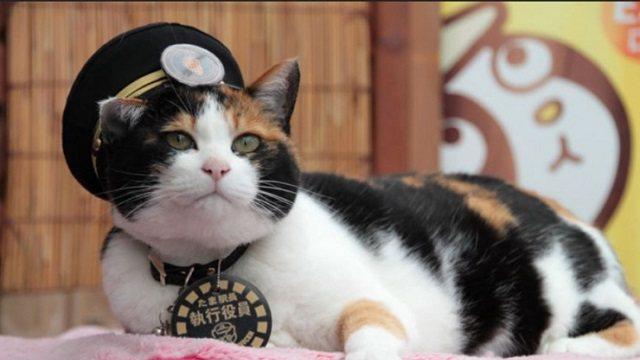 Главой полицейского управления в Японии стала… кошка