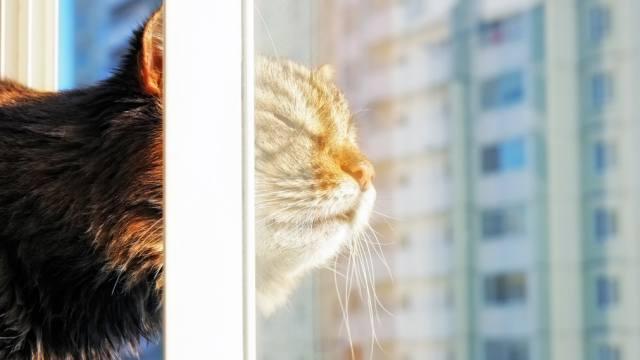 Как вымыть окна без разводов: Полезные советы