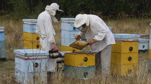 О старых проблемах рассказали пчеловоды Костанайской области