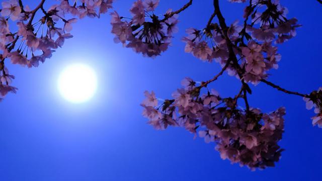 В мае взойдет «цветочная луна». Когда ждать Суперлуния?