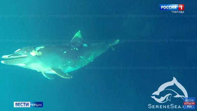Кладбище дельфинов нашли на дне Черного моря