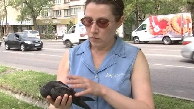 «Кровь изо рта»: 20 мертвых голубей нашли на улице Алматы