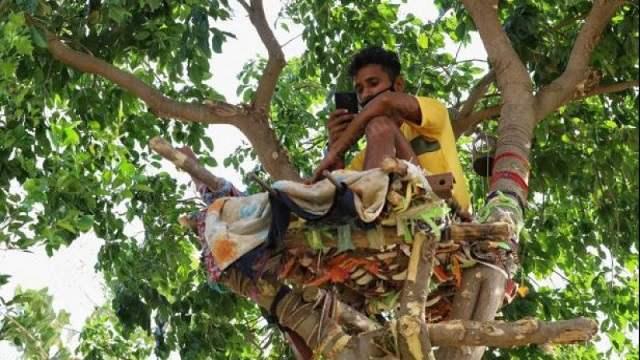 Индус просидел 11 дней на дереве, чтобы не заразить семью