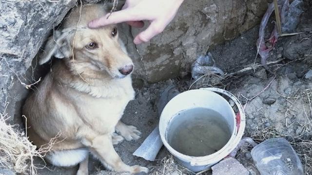 «Не остановился»: Водитель сбил собаку в Костанайской области