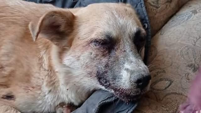 Вилами в собаку: Живодёра могут арестовать в Казахстане