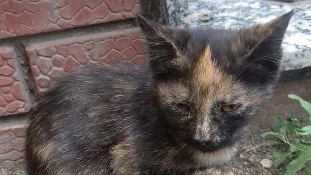 Дети засунули в задний проход котёнка палку в Нур-Султане