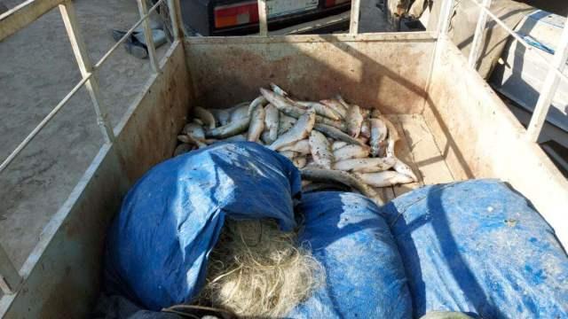 Семейную пару браконьеров осудили в Туркестанской области