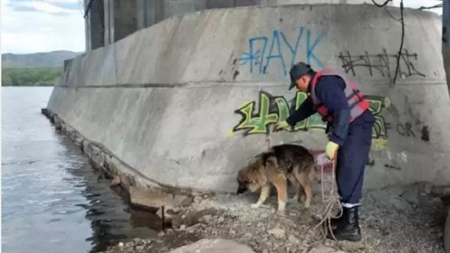 Застрявшую посреди реки собаку спасли в Усть-Каменогорске