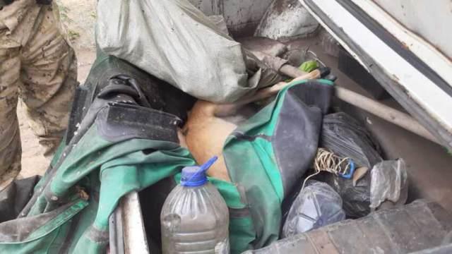 Сибирскую косулю убили браконьеры в Костанайской области