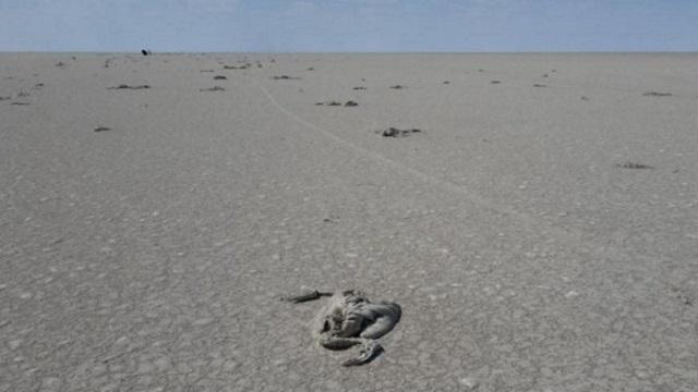 Сотни фламинго погибли на пересохшем озере за неделю
