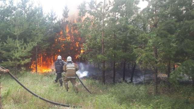 Двое суток тушили крупный лесной пожар под Костанаем