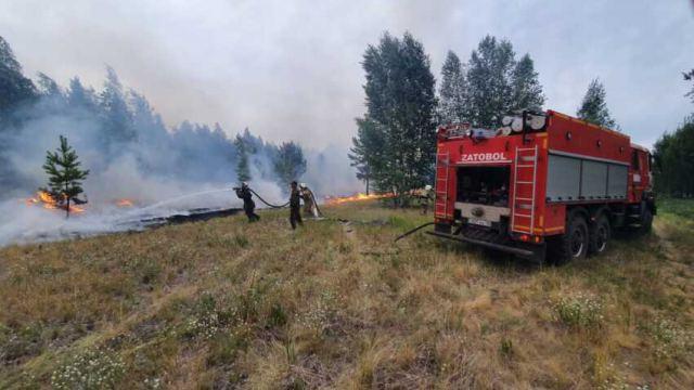 Из-за лесного пожара из лагеря «Алтынгуль» эвакуировали детей