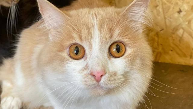 Рыжего кота хозяйка бросила прямо в аэропорту