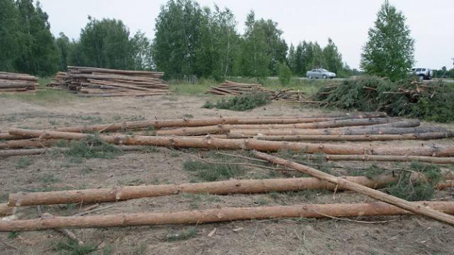 Кто валит зелёный лес в Костанайской области?