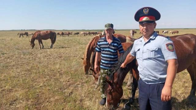 Три лошади исчезли с вольного выпаса в Костанайской области