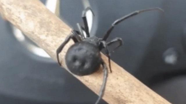 Ядовитый паук каракурт укусил мужчину в Алматинской области