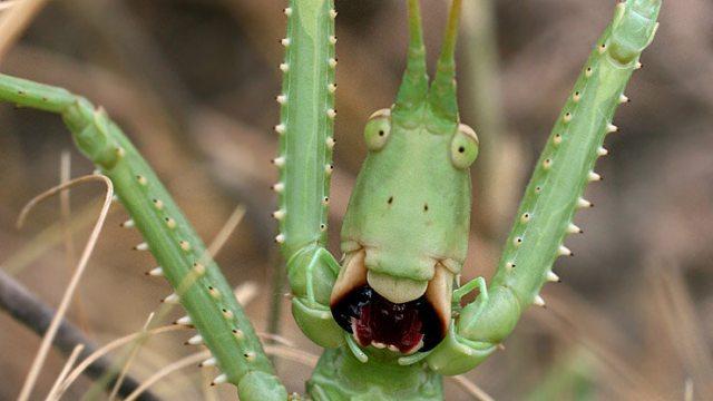 «Что это за чудовище?» Редкое насекомое увидели под Костанаем