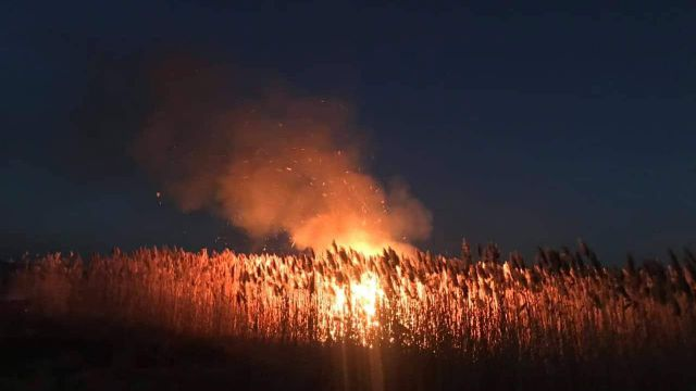 Камыш на тысяче гектаров сгорел в Наурзумском заповеднике
