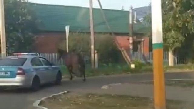 Утро для полицейских Костаная началось с сопровождения… лошади