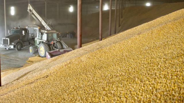 «Как выжить фермеру?»: Отруби по цене догоняют зерно в Казахстане