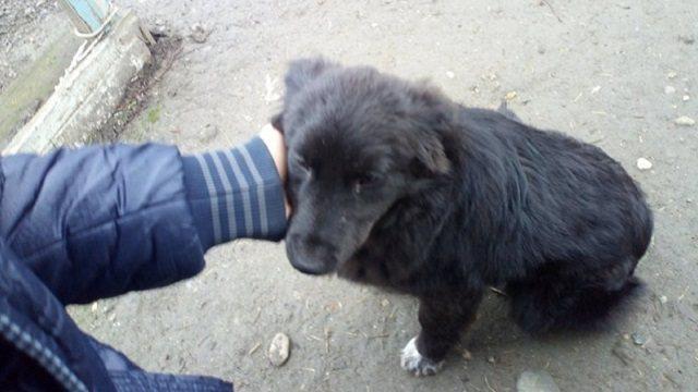 Наказывать за поедание собак и кошек будут в Казахстане