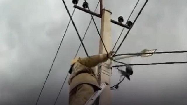 Спасение пожарными ворона в Сатпаеве попало на видео